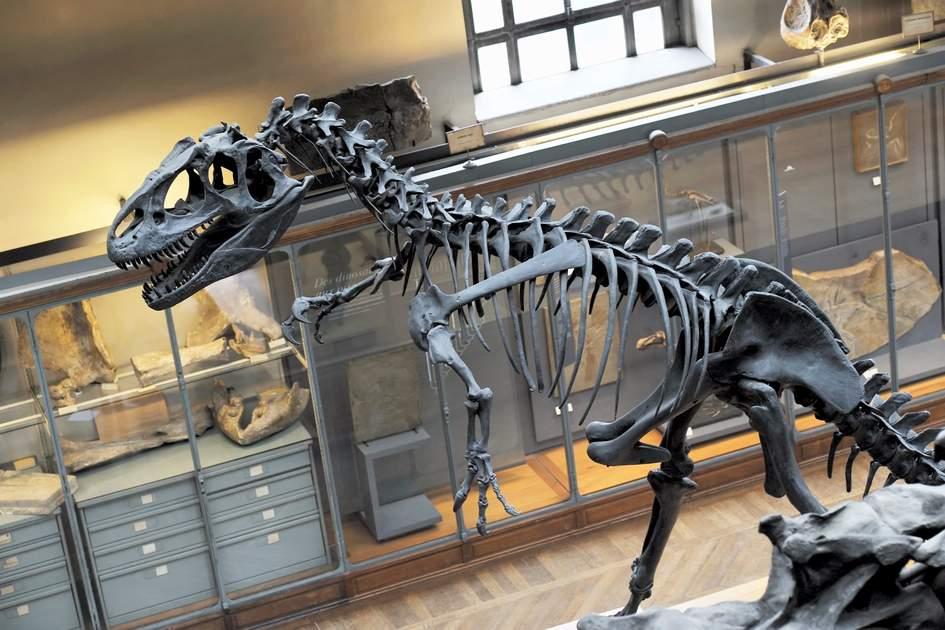 Museum of Natural History in Paris