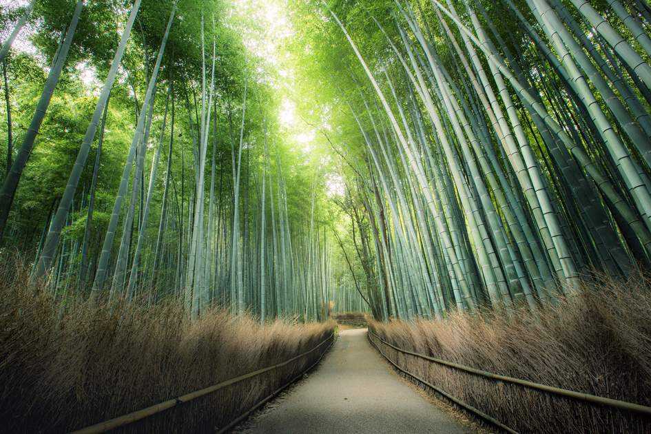 Bamboo Forest in Japan, Arashiyama, Kyoto