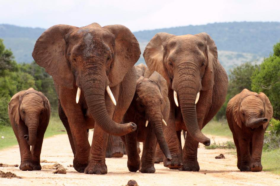 Addo Elephant National Park, Eastern Cape, South Africa
