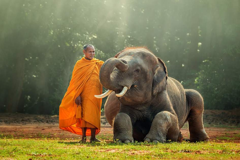 Lao Monk and Baby Elephant. Photo: Shutterstock
