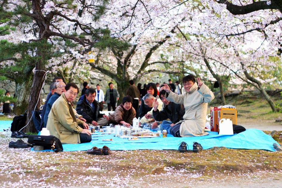 Japanese cherry blossoms picnic. Photo: Shutterstock
