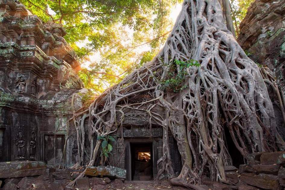 Tree roots envelop some of the temples in Angkor, Cambodia