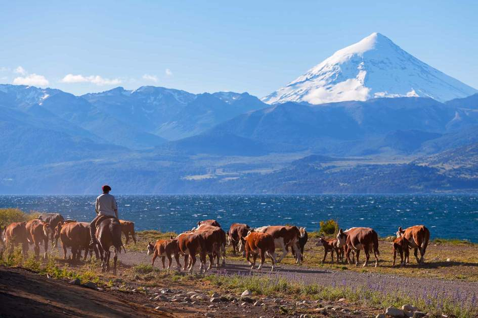 Gaucho and his herd, Patagonia, Argentina