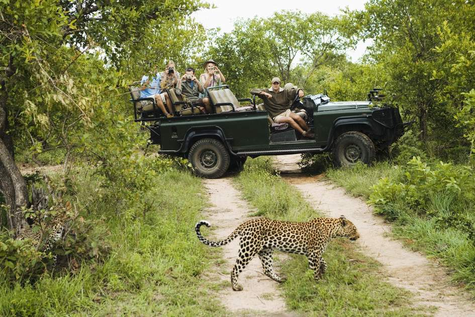 Wildlife watching should feature on your next trip itinerary