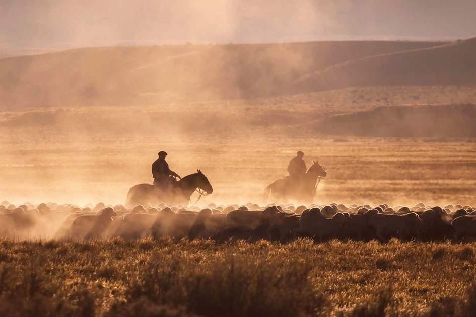 Patagonian gauchos herding sheep, Argentina