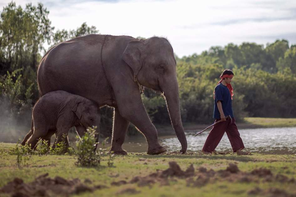 Elephant and mahout of the Thailand Elephant Village. Photo: Shutterstock