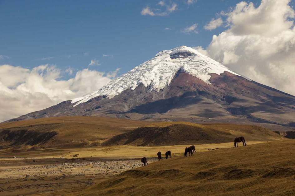 Cotopaxi volcano and wild horses, Ecuador