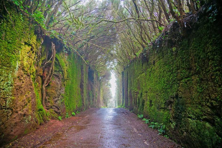 Fabulous tunnel in the Rural Park Anaga in Tenerife, Canary Islands, Spain