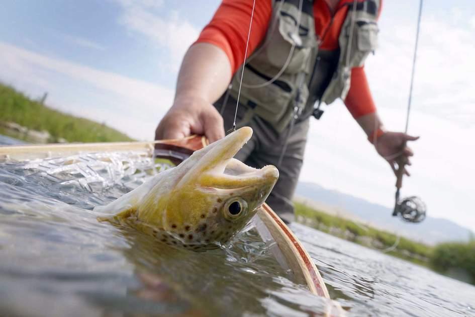 Fishing trout. Photo: Shutterstock