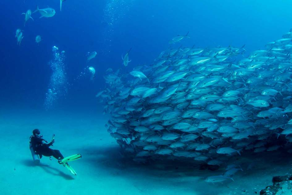 A shawl of trevally jack, Baja California Sur, Mexico. Photo: Shutterstock