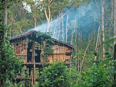 Korowai Treehouse Trek: An Indonesian Expedition | A once-in-a