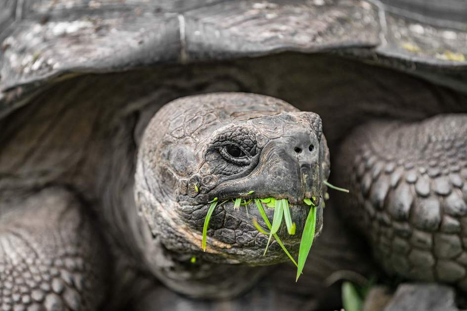 Tortoise on the Galapagos Islands. Photo: Shutterstock