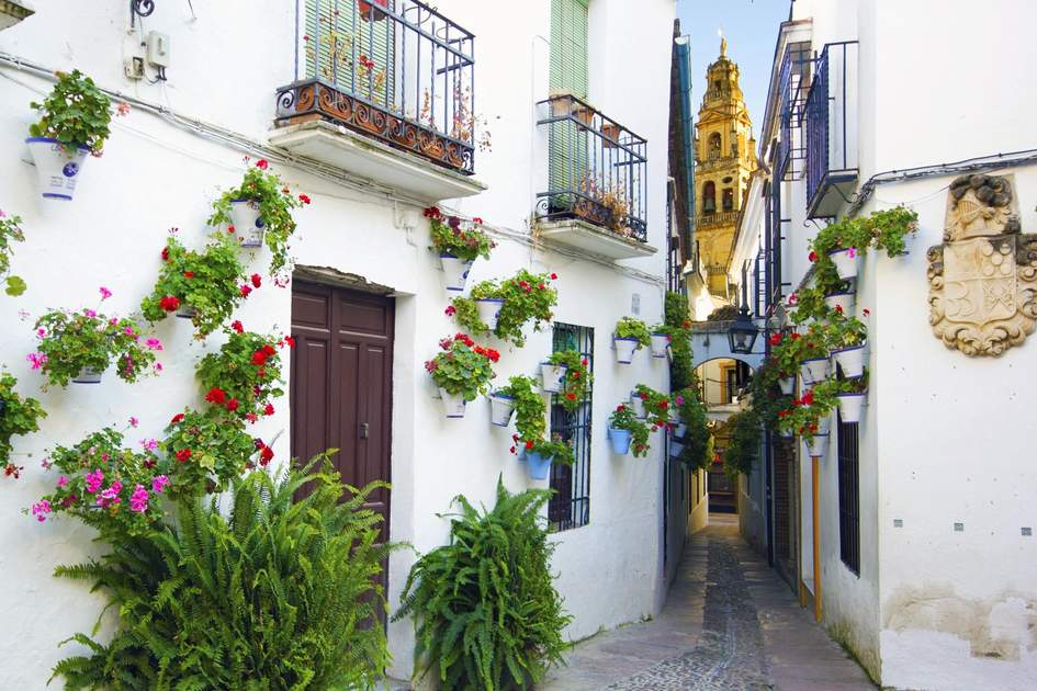 Flowers adorning houses on the streets of Córdoba.