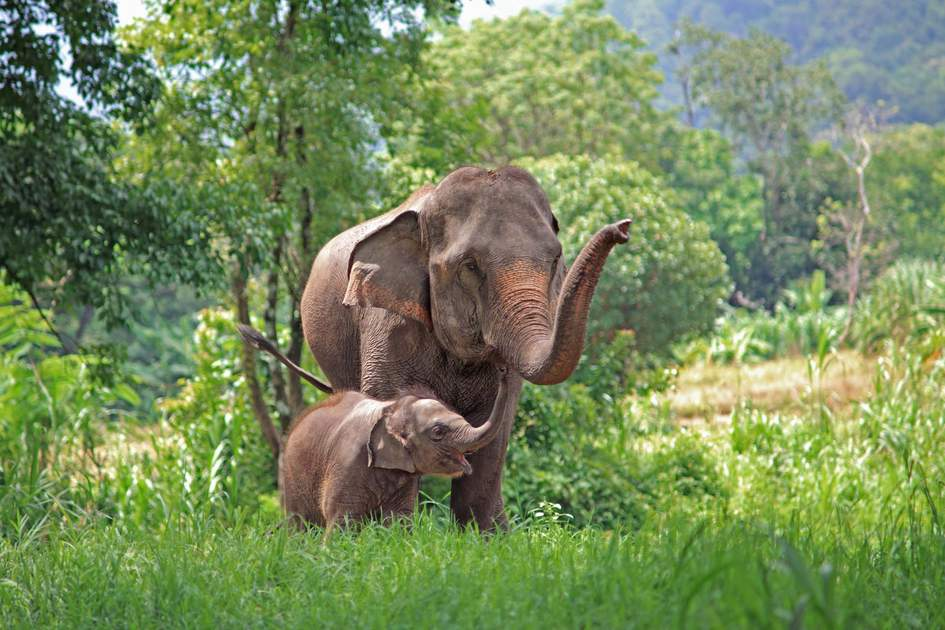 Elephant and child in the forests of Thailand