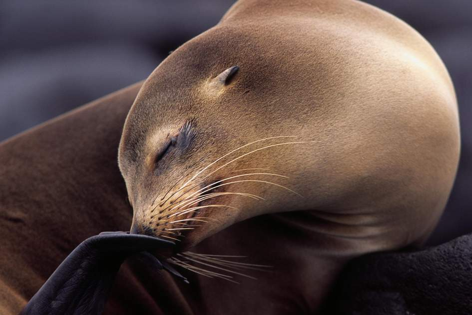 Sea lion, Galapagos, Ecuador. Photo: BMJ/Shutterstock