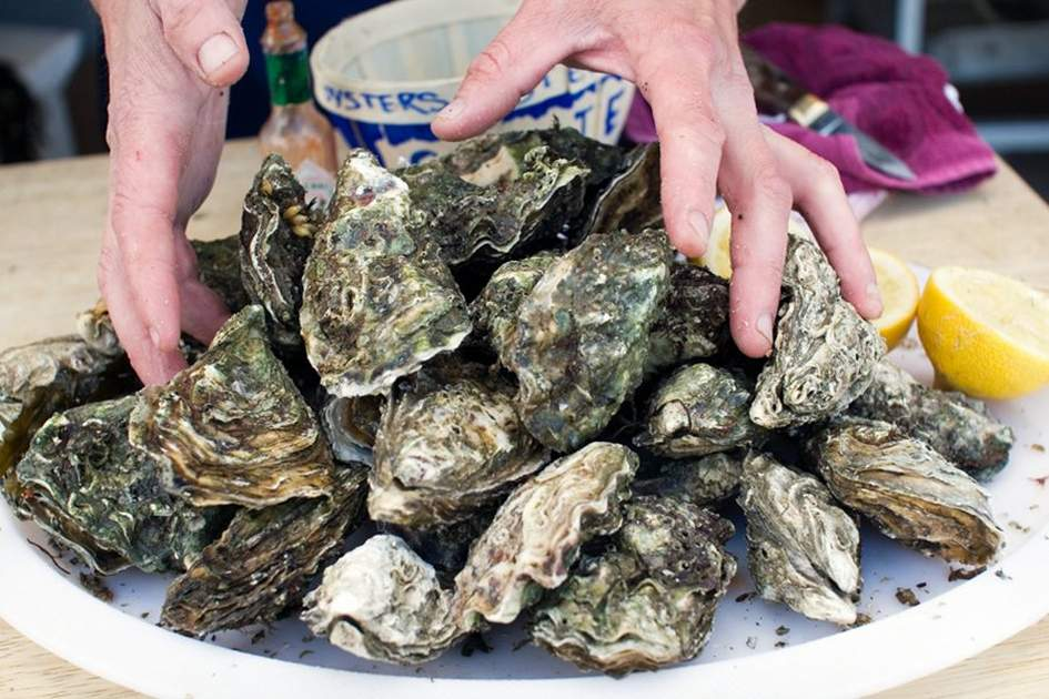 Galway Oysters, (photo by Corrie Wingate)
