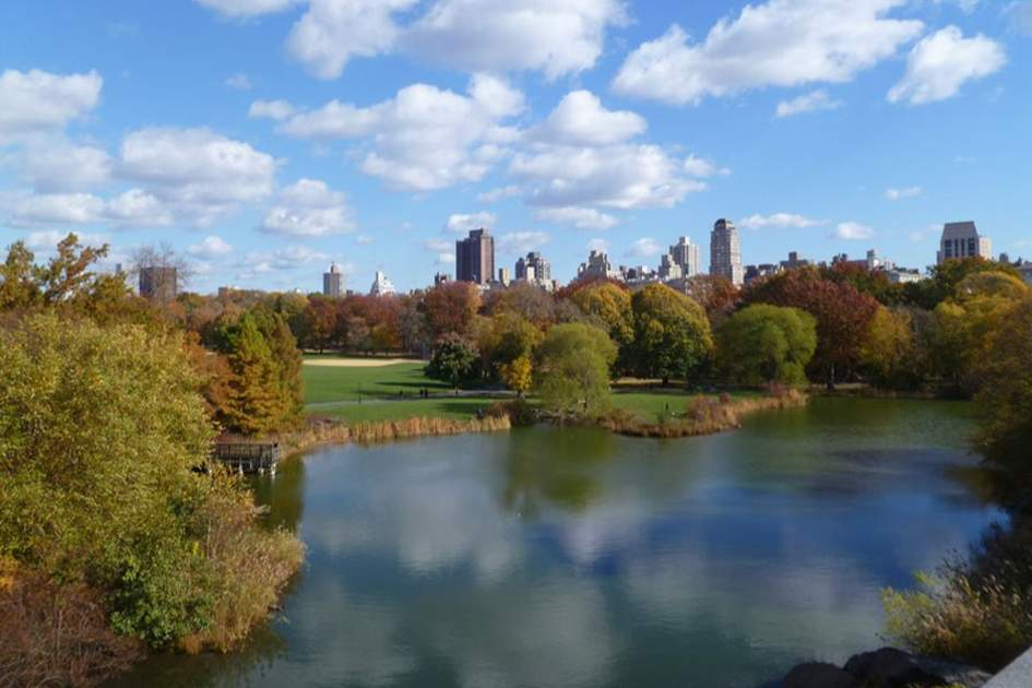 Central Park in fall, (photo by Sarah Clark)