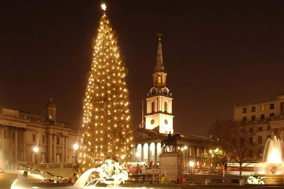 Trafalgar Square Christmas Tree, (photo by Alisdair Macdonald)