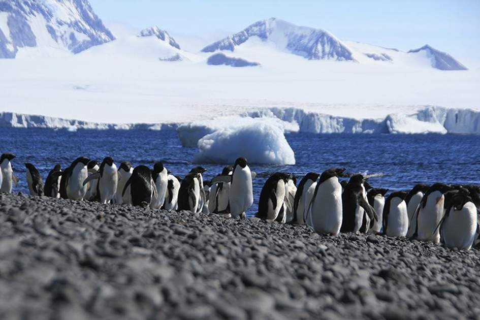 Adele penguins in Antarctica, (photo by iStock)