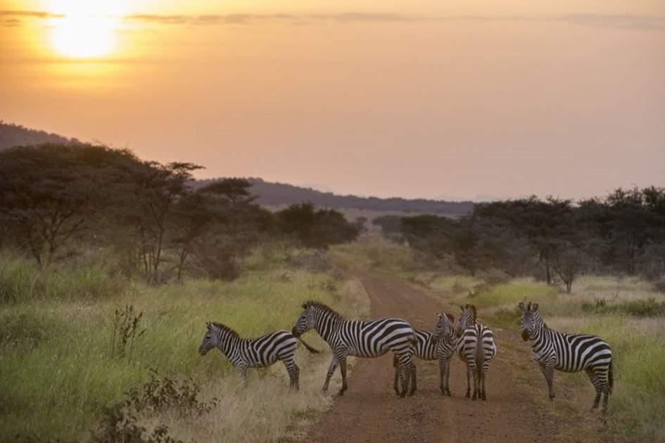 Serengeti National Park, Tanzania, (photo by Ariadne Van Zandbergen)